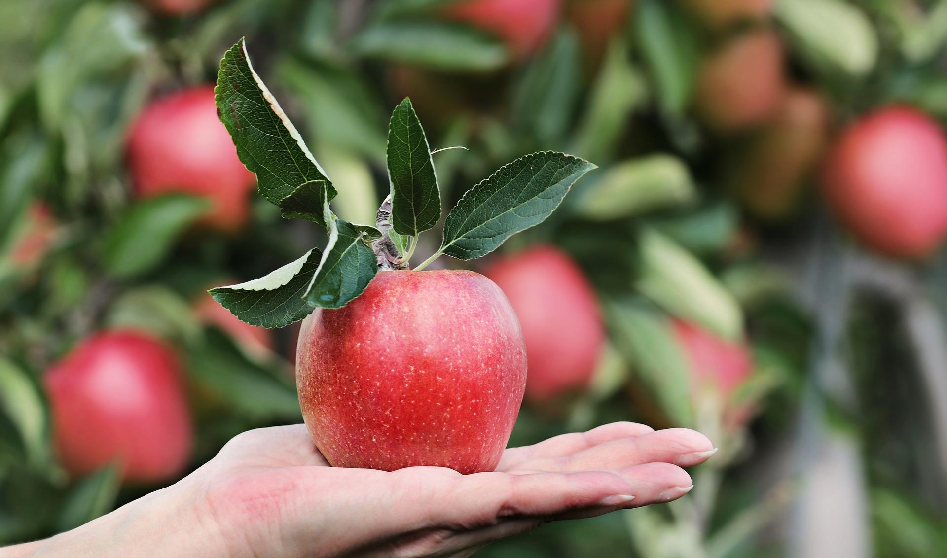 איך דשנים תורמים לייצור בר-קיימא של מזון
